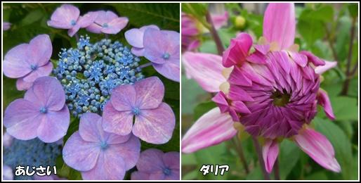 庭の花 6月24日