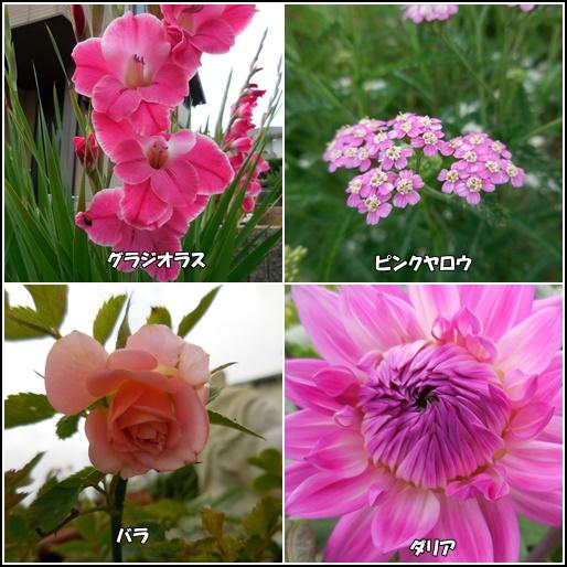 庭の花 6月29日