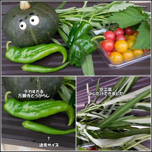9月11日収穫