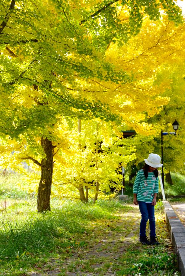 紅葉1023_ちぃもみの木荘前イチョウ