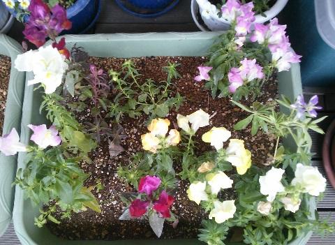 gardening677.jpg