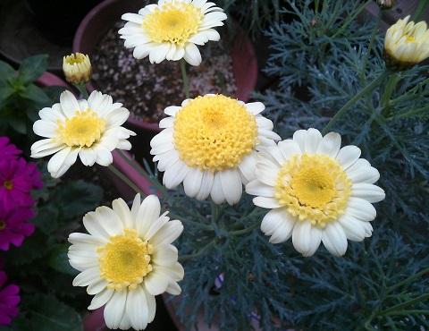 gardening680.jpg