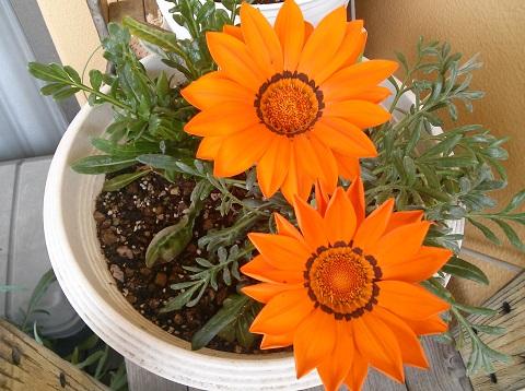 gardening681.jpg