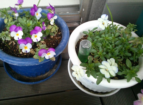 gardening683.jpg