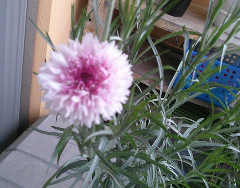 gardening685.jpg