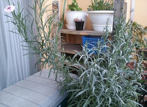 gardening686.jpg
