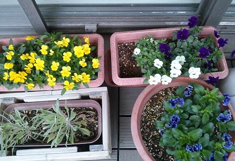 gardening688.jpg