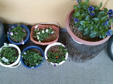 gardening689.jpg