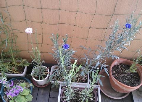 gardening692.jpg