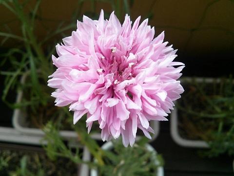 gardening693.jpg