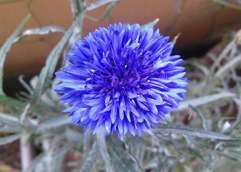gardening694.jpg