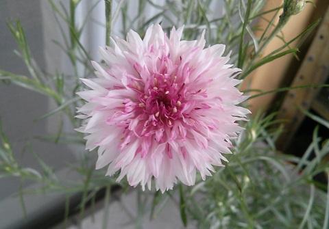 gardening695.jpg