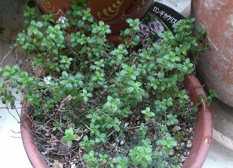 gardening698.jpg