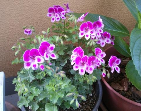 gardening701.jpg