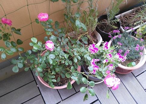 gardening702.jpg