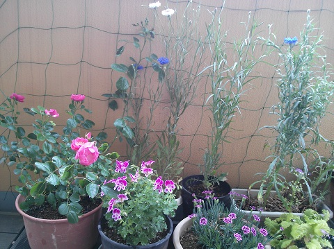 gardening704.jpg