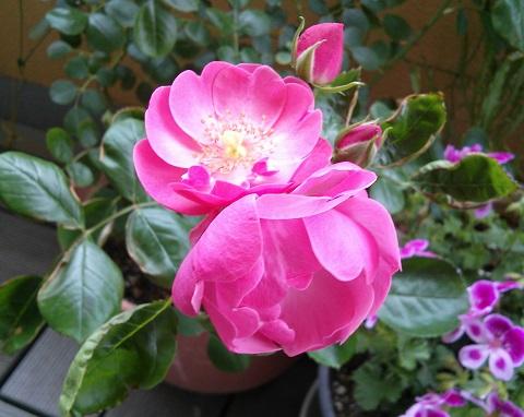 gardening705.jpg