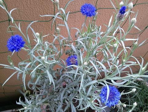 gardening707.jpg