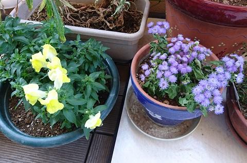 gardening713.jpg