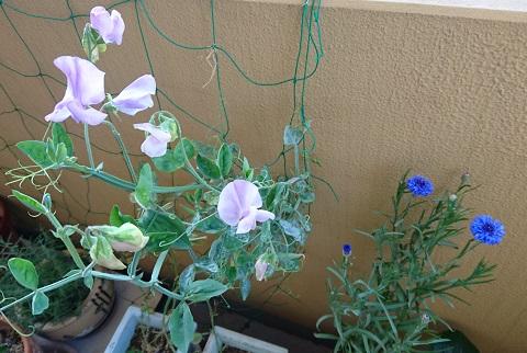 gardening715.jpg