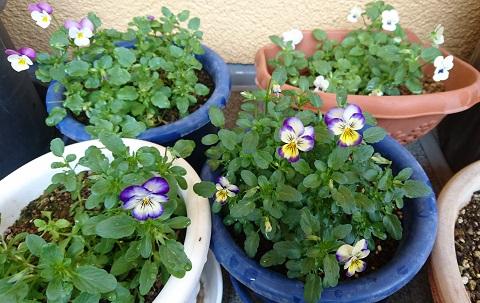 gardening716.jpg
