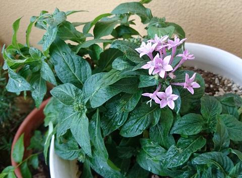 gardening722.jpg