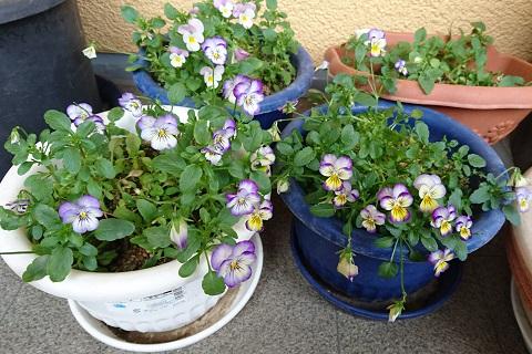 gardening723.jpg