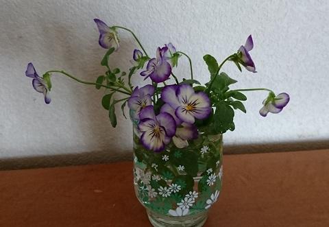 gardening724.jpg