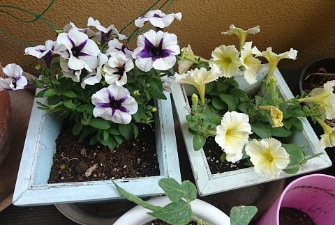gardening725.jpg