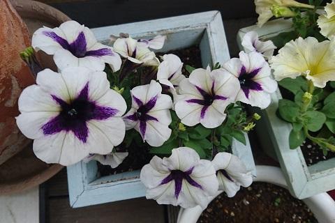 gardening726.jpg