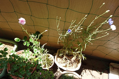 gardening729.jpg