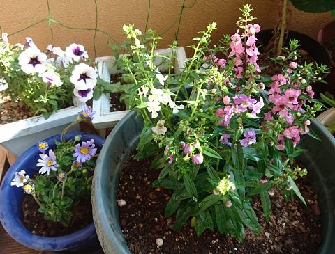 gardening730.jpg