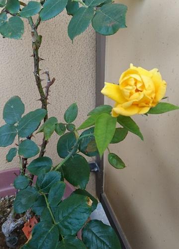 gardening731.jpg