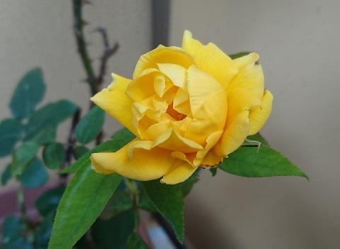 gardening732.jpg