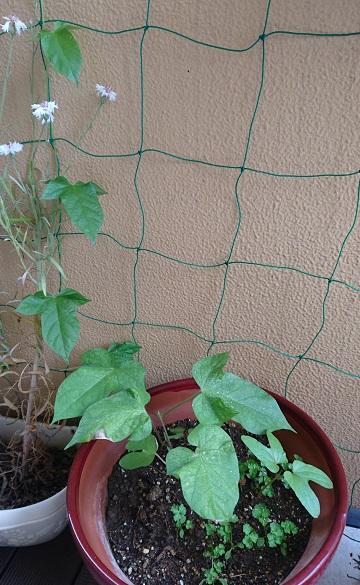 gardening738.jpg