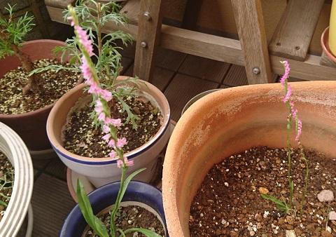 gardening742.jpg