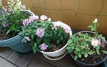 gardening746.jpg