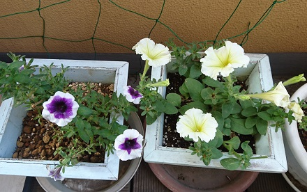 gardening748.jpg