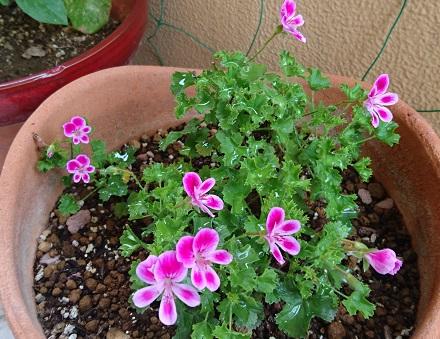 gardening753.jpg