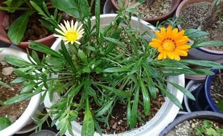 gardening754.jpg