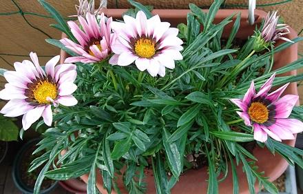 gardening755.jpg