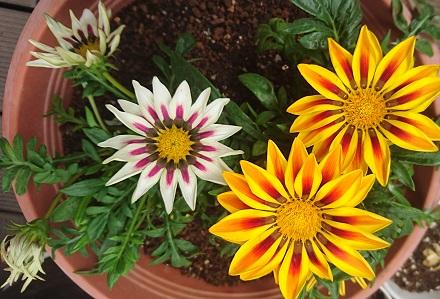 gardening756.jpg