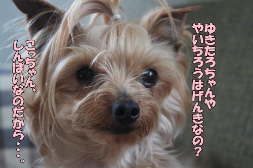 IMG_86300.jpg