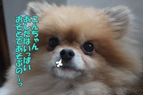 IMG_87120.jpg