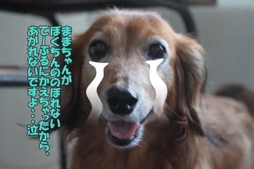 IMG_87170.jpg