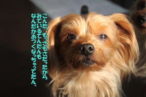 IMG_880702.jpg