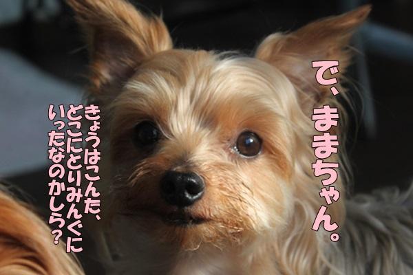 IMG_881003.jpg
