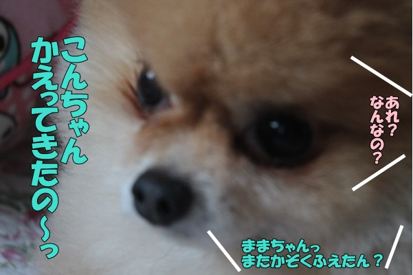IMG_882007.jpg