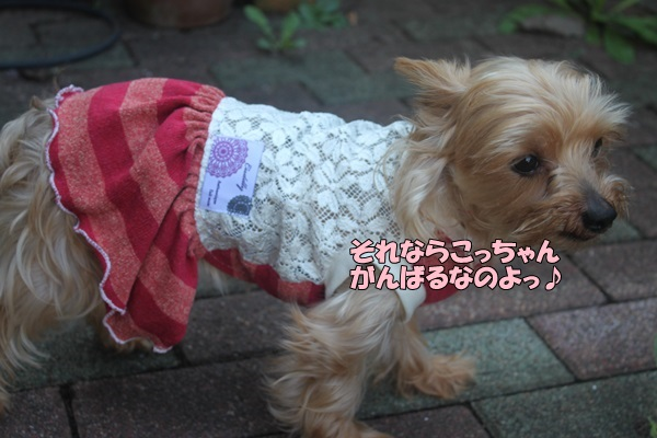 IMG_889301.jpg