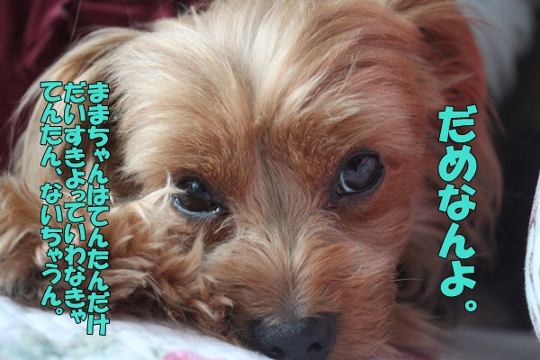 IMG_893301.jpg